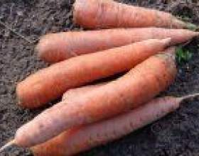 """Хвороби моркви при зберіганні С""""РѕС'Рѕ"""