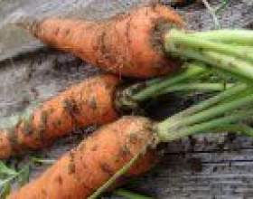 Як правильно сіяти моркву фото