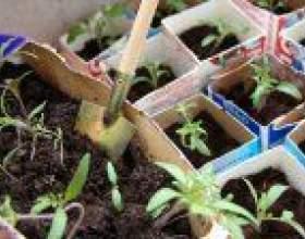 Який готовий грунт вибрати для розсади? фото