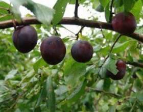 Кальцій для плодово-ягідних культур фото
