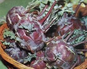 Капуста кольрабі - вирощування розсади, догляд в період дозрівання фото