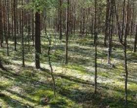 """Лікарські рослини в квітні С""""РѕС'Рѕ"""