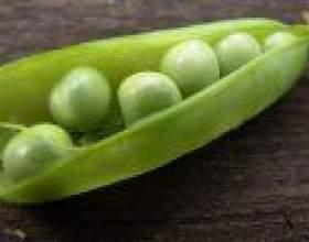 Маточники на насіння фото