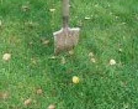 Підготовка ґрунту на новій ділянці фото