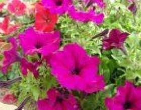 Підготовка землі і грунту для квітників фото