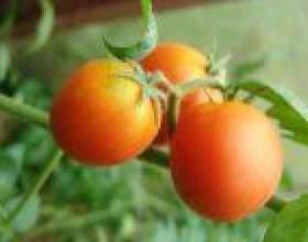 Рятуємо огірки і помідори від надлишків вологи фото