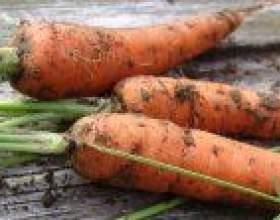 Спосіб посадки моркви фото
