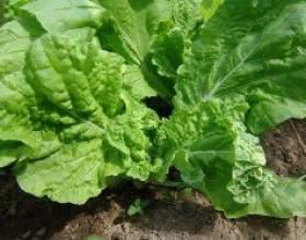 Свіжі овочі до початку літа фото
