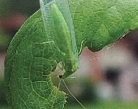 Захист рослин від шкідників і хвороб. Біологічний захист рослин. Хімічний захист рослин фото
